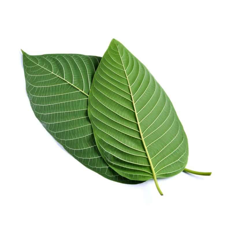 Herbal Salvation Kratom Products